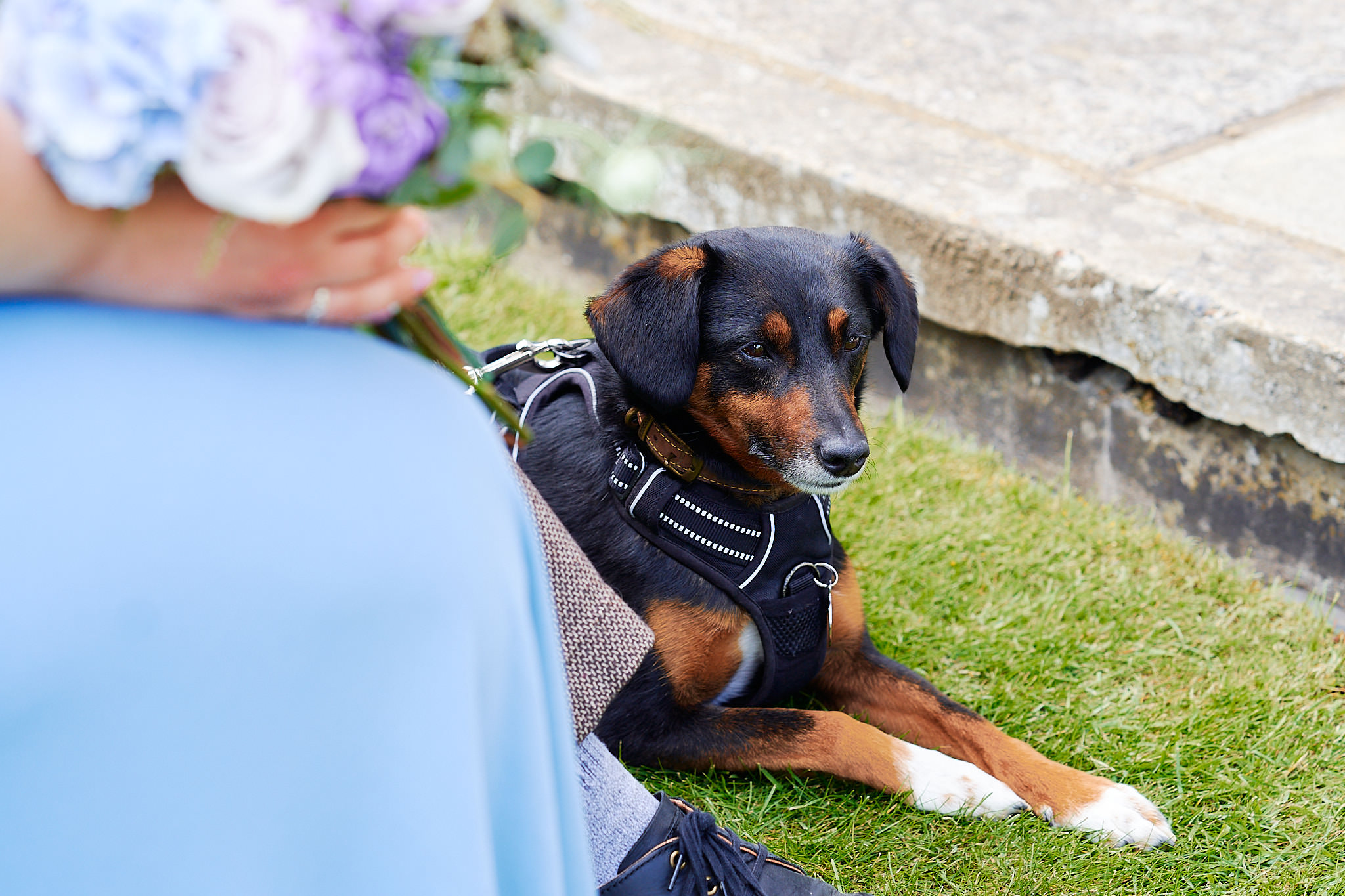 pet puppy at outdoor ceremony in avington park house